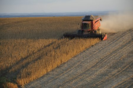 soybeans-1543071_1920
